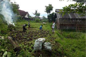 Penanaman Hijauan Unggul (Rumput Odot dan Kaliandra)  Di Ponpes Rodhatul Madina, Junrejo, Batu